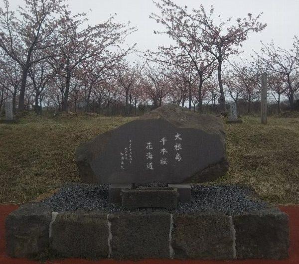 【松江石碑】八束町「大根島千本桜花街道」